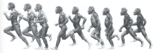 Ape to Man running
