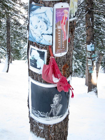 You can ski and fantasize that you're JFK. And that Marilyn is a tree. A tree with a pill habit who knows too much.