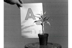 John Baldessari,  Teaching a Plant the Alphabet, 1972.