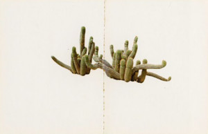 Ed Rscha, Cactus from his series Colored People