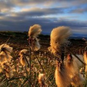 windypic
